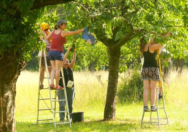 Menschen flücken Äpfel von einem Baum